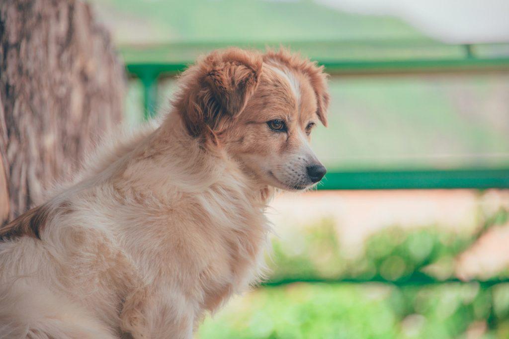 Choisir une mutuelle pour son chien
