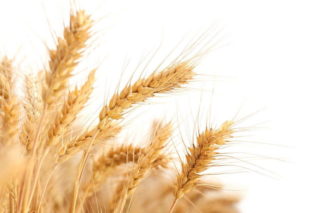 Cours du blé