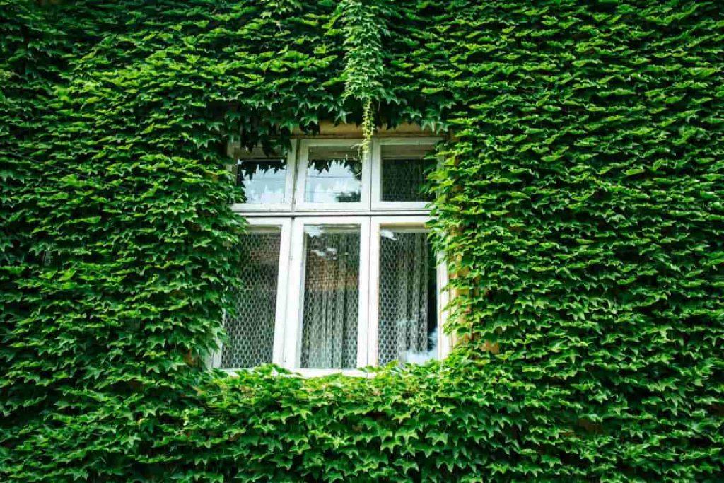 Quelles normes environnementales pour la location ?